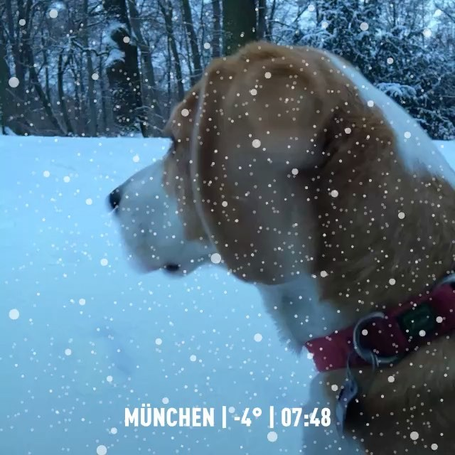 dog walk #munich #snow #winter #dogwalk